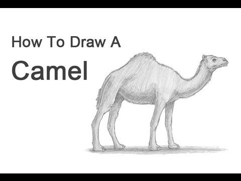 Drawn camels easy Camel How Draw Pinterest to