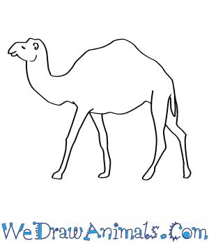 Drawn camel line drawing Dromedary a How  Draw
