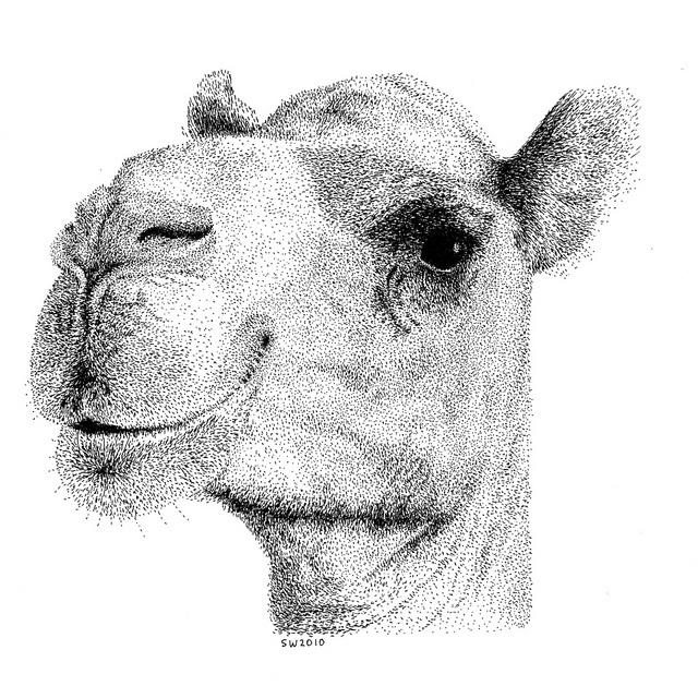 Drawn camels head On Camel Camel Smiling images