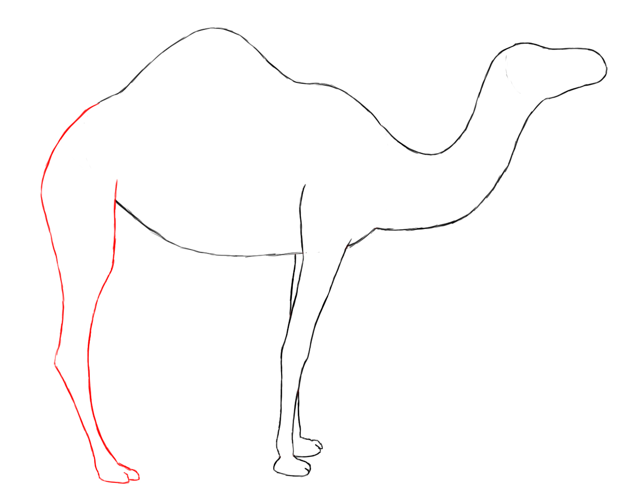 Drawn camels line drawing To technique same exact they