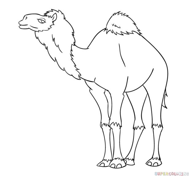 Drawn camels line drawing Cartoon a draw draw a