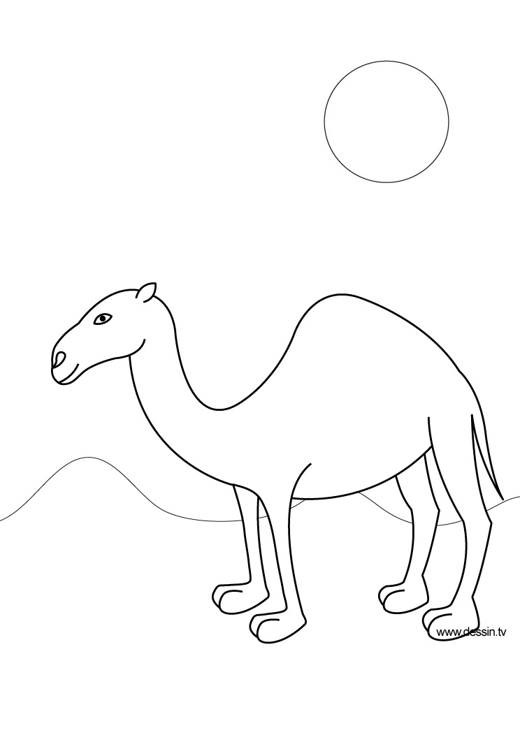 Drawn camels line drawing Camel Coloring camel coloring