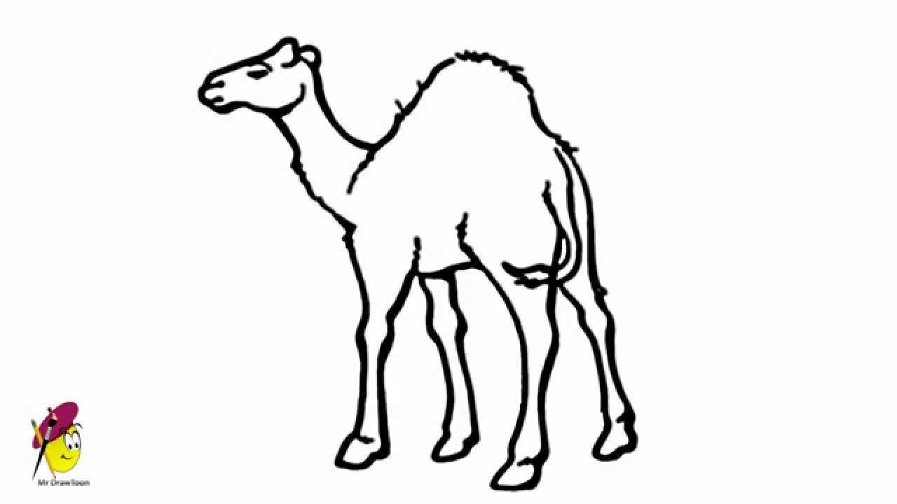 Drawn camels line drawing How Desert of Camel Camel