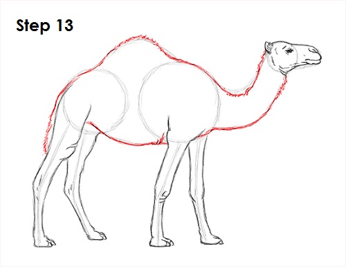 Drawn camels line drawing To How 13 Camel Camel