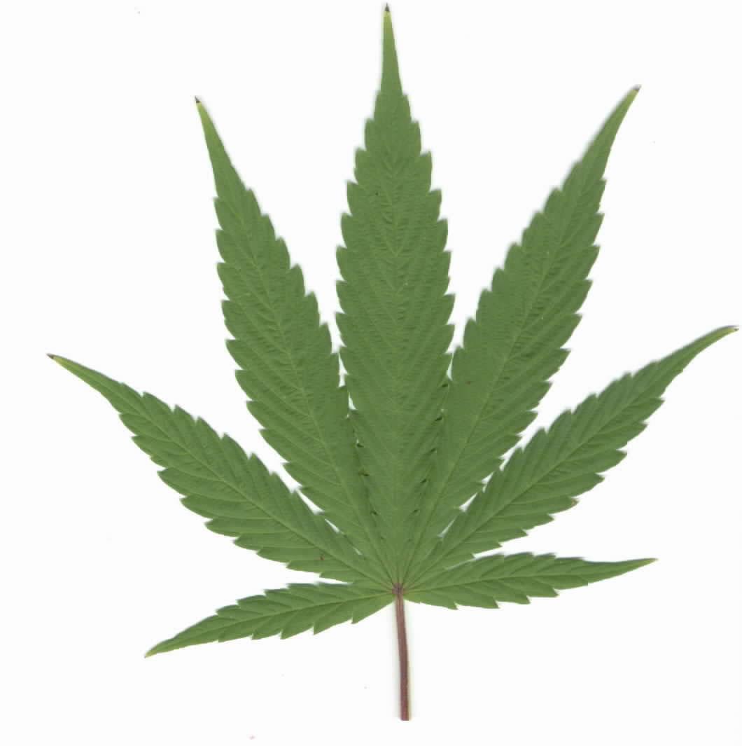 Drawn cannabis badass The ADHD Today  Psychology