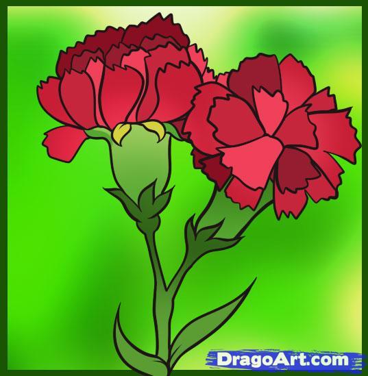Drawn carnation Draw Pop how Draw How