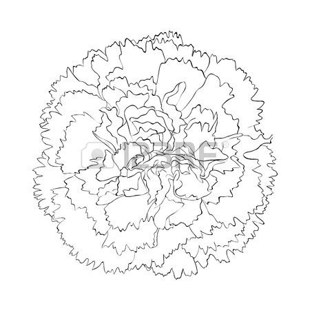 Drawn carnation Drawing Best carnation tattoo Search