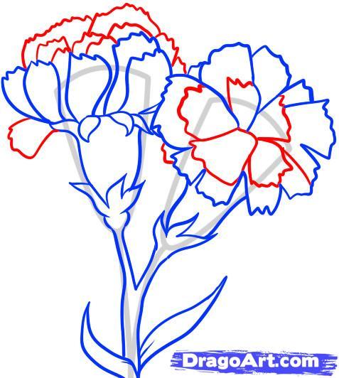 Drawn carnation Draw Step how How