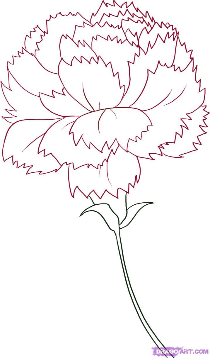 Drawn carnation Drawing Carnation a Carnation Step