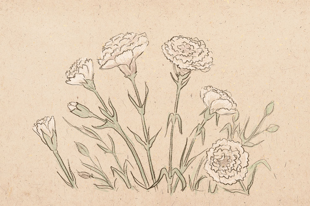 Drawn carnation Draw How How how art