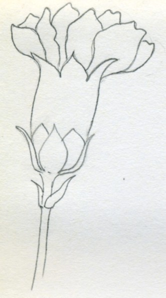 Drawn carnation Ellipses proportions How yet These