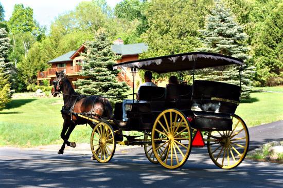 Drawn carriage Carriage Lake Picture Lake rides