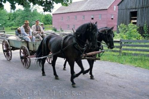 Drawn cart Horse plans  Drawn Cart