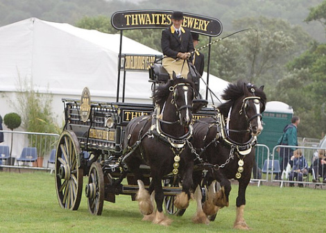 Drawn cart heavy horse Thwaites THE Simply Horse than