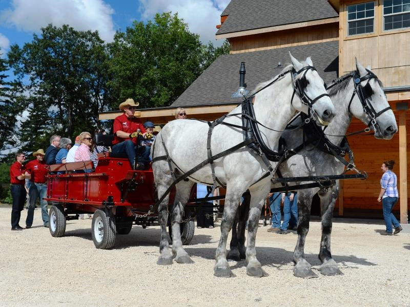 Drawn cart heavy horse Horse  McFeetors Centre Heavy