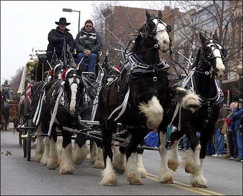 Drawn cart heavy horse Shire
