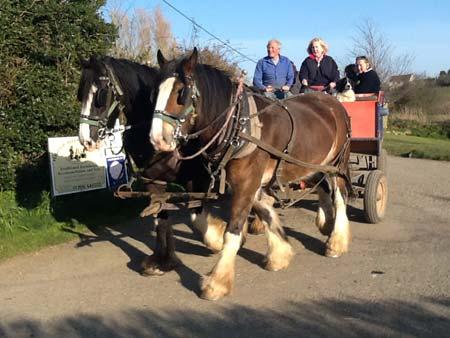 Drawn cart heavy horse Wagon  North Shire Rides