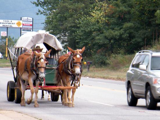 Drawn cart mule Carriage A A mule highway