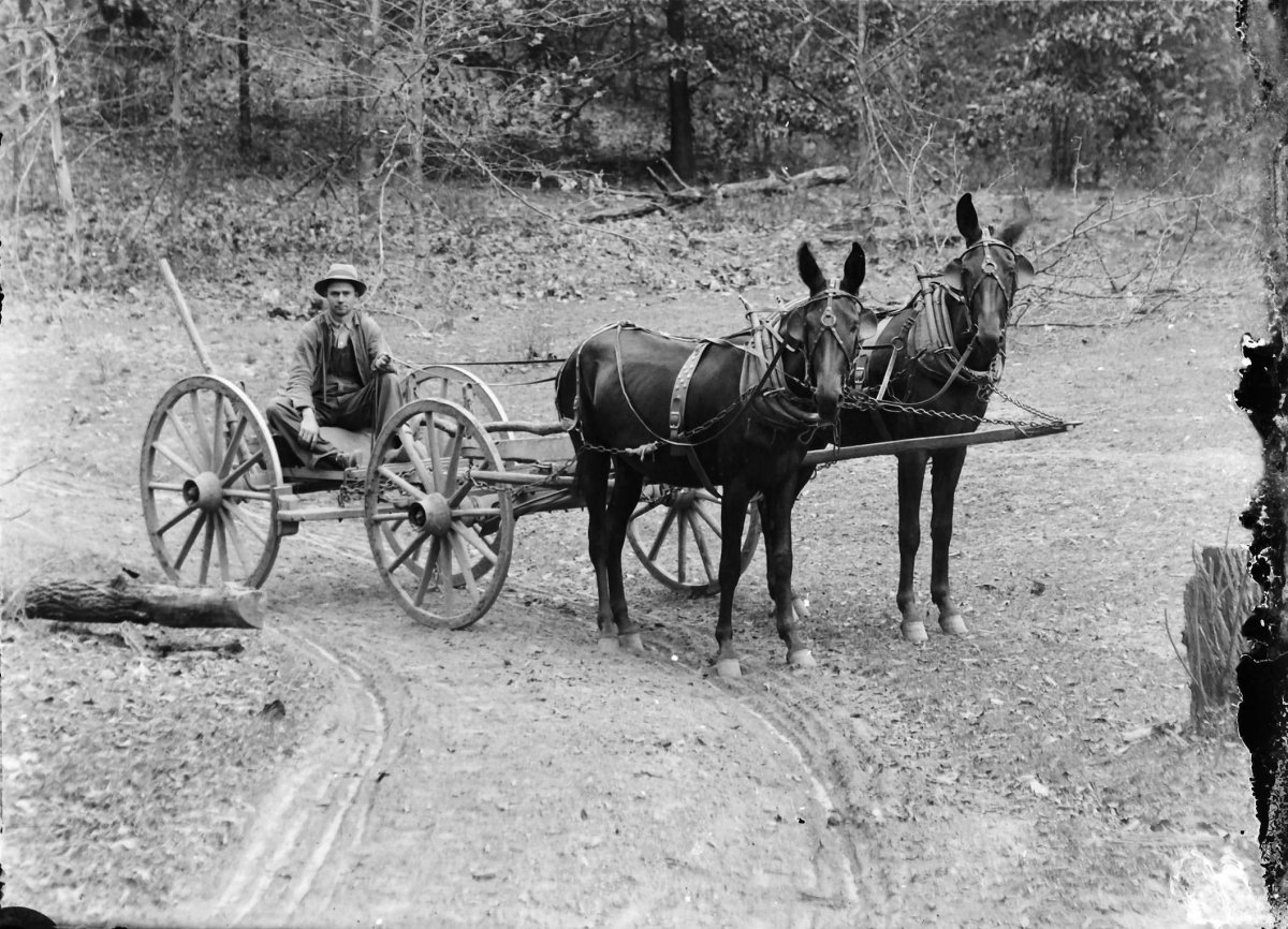 Drawn cart mule This Feltner email Photo A