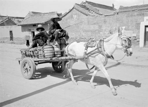 Drawn cart mule Mule with in riding wooden