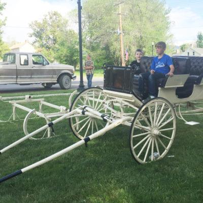Drawn cart sheep Wagons Sleigh  Horses Carriage