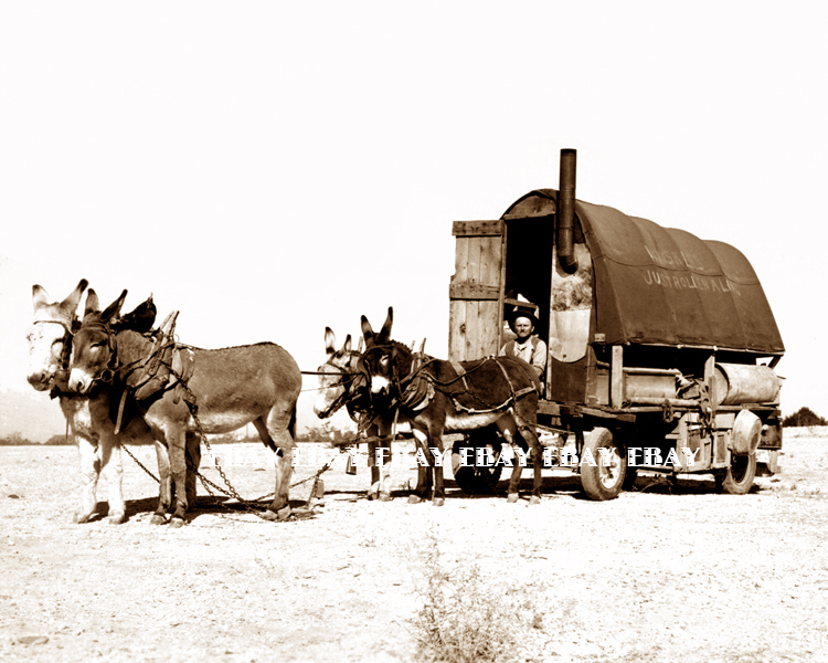 Drawn cart sheep Wagon Wagon in of Herders