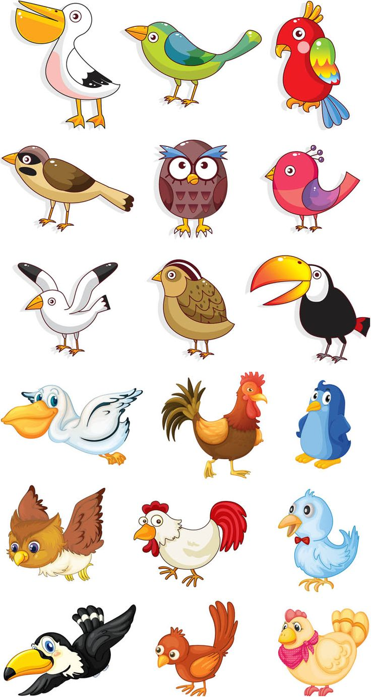 Pelican clipart animated Animal on Graphics best 282