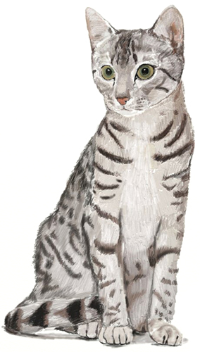 Drawn pice cat A Realistic Cat by How