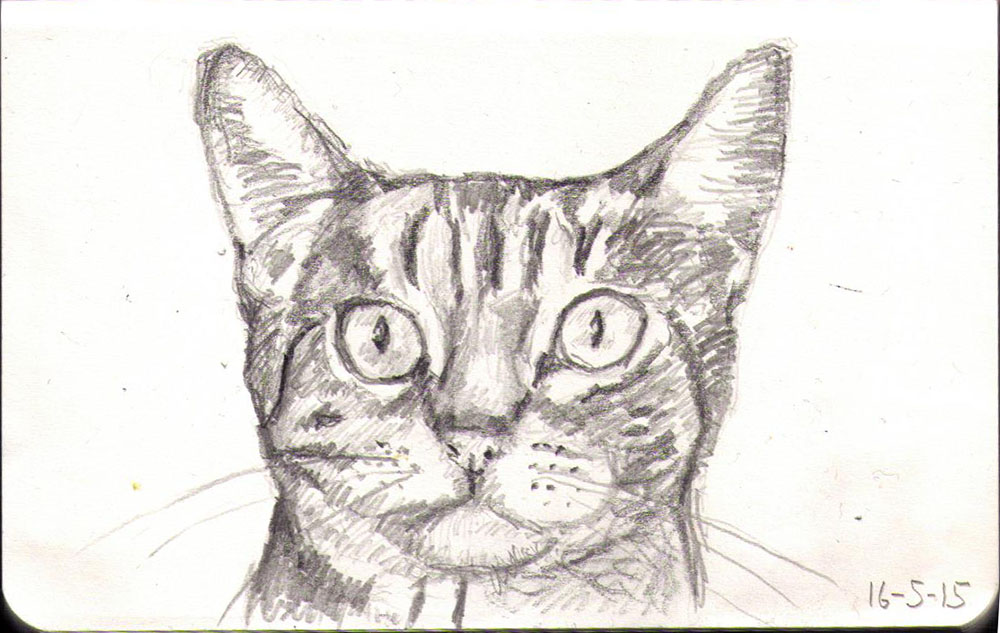 Drawn pice cat Tumble A cat drawn a