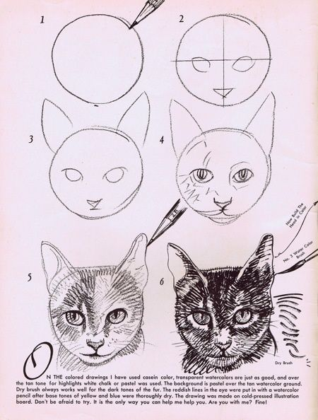 Drawn cat step by step #14
