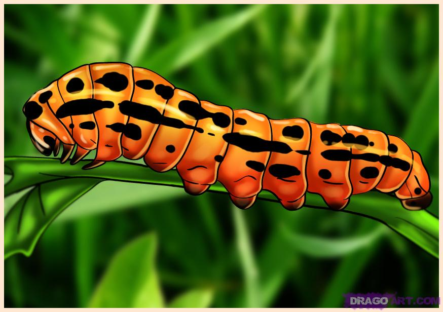 Drawn caterpillar Step to by draw Bugs