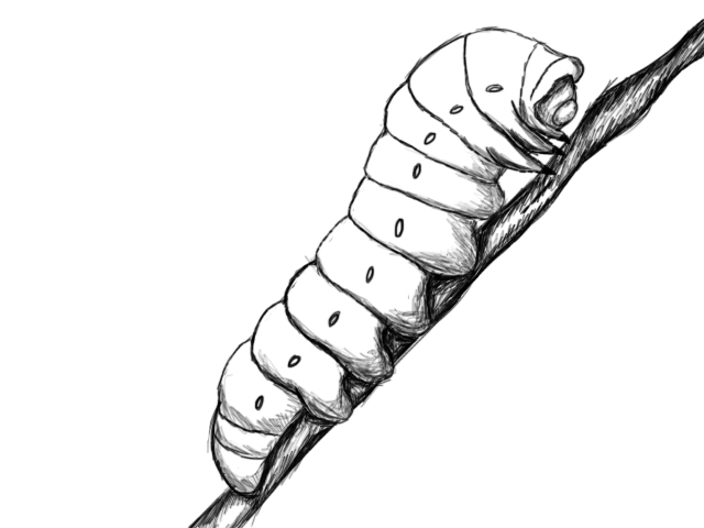 Drawn caterpillar #2