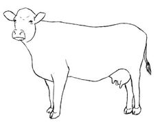 Drawn cattle  A To How Draw