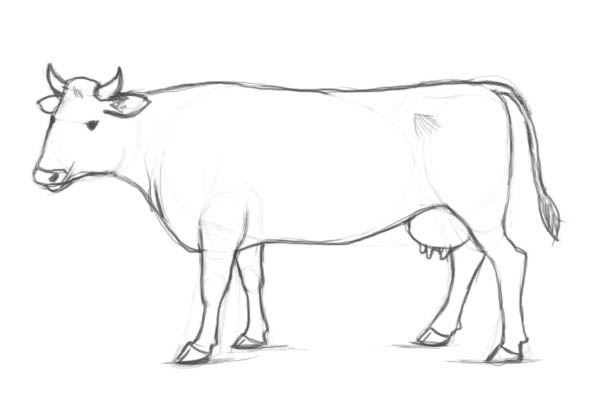 Drawn cattle How The draw by result!