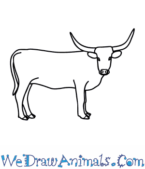 Drawn bull easy To Cattle  Draw How