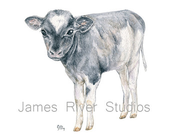 Drawn cattle baby calf #13