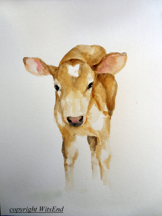 Drawn cattle baby calf #12
