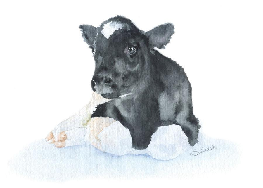 Drawn cattle baby calf #10