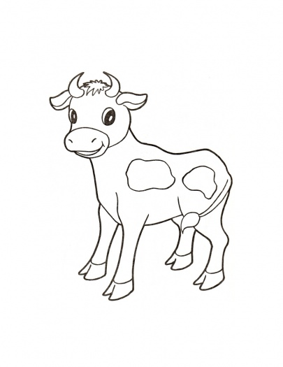 Drawn cattle baby calf #6