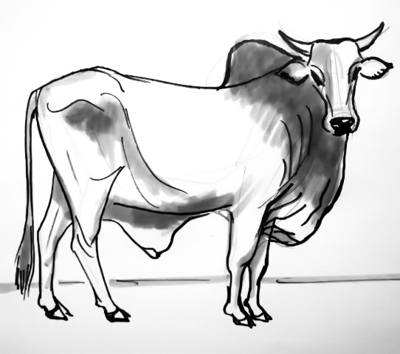 Drawn bulls outline Step How step Bull by