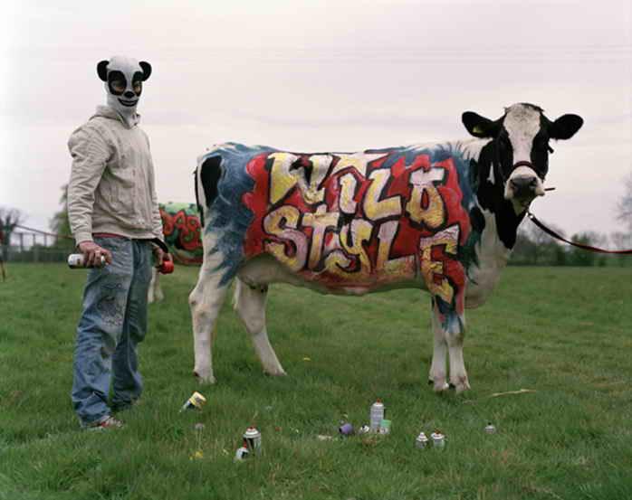 Drawn cattle graffiti #3