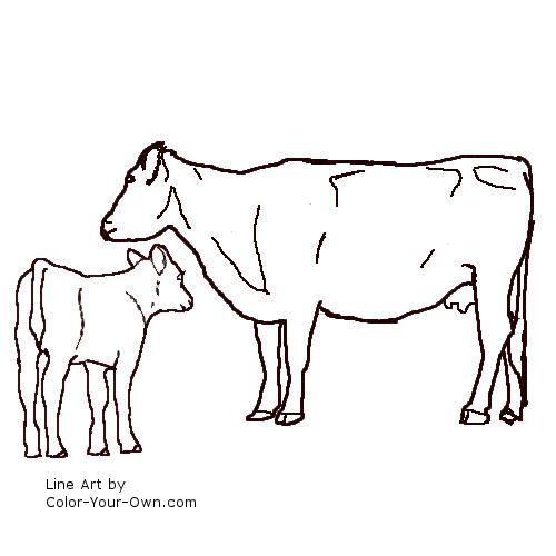 Drawn cattle line art #3