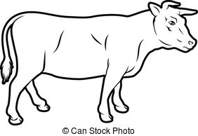 Drawn cattle line art #8