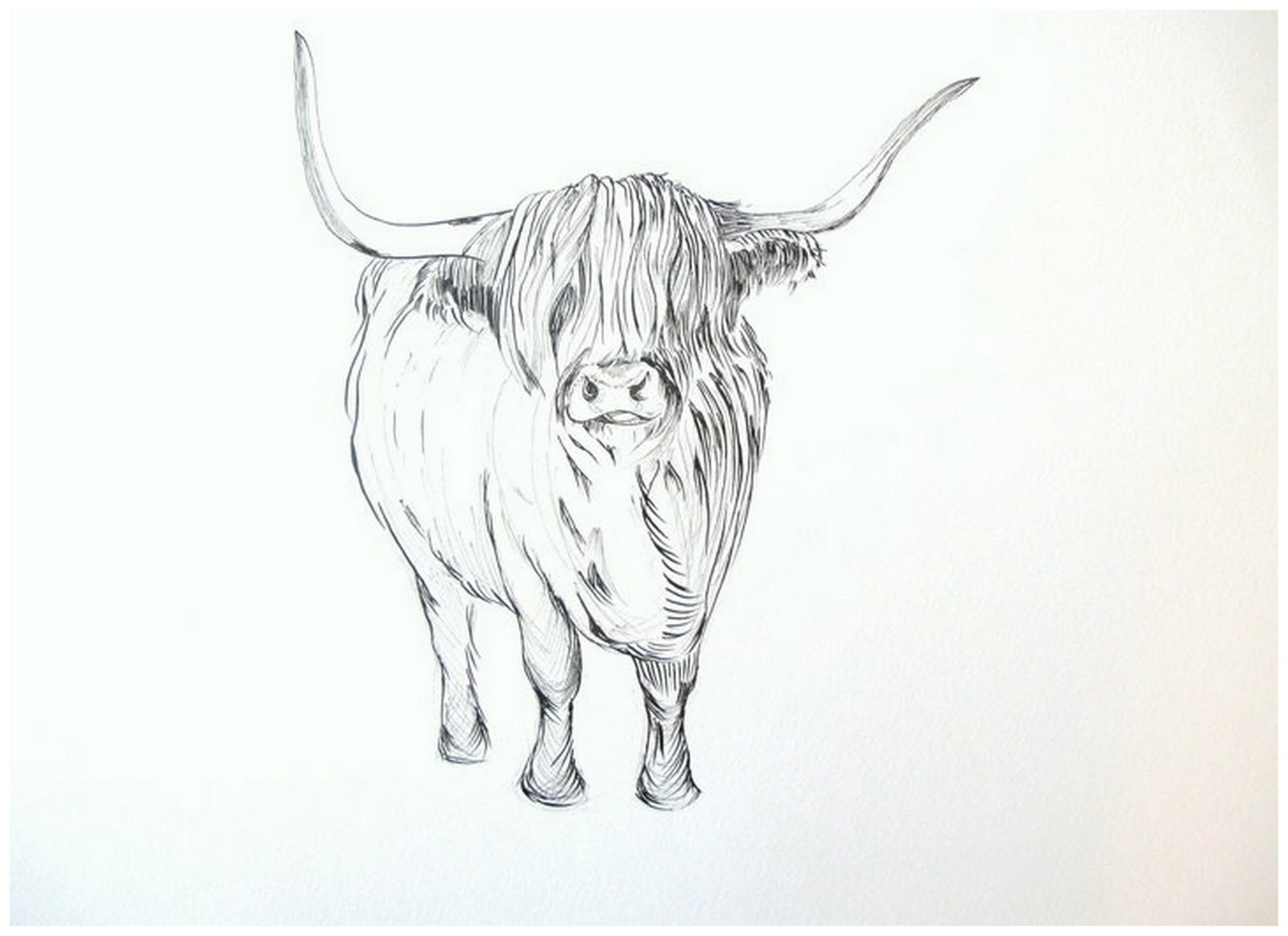 Drawn cattle line art #5