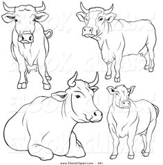 Drawn cattle line art #9