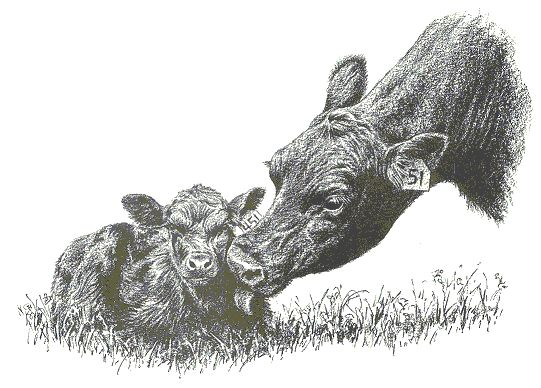 Drawn cattle line art #10