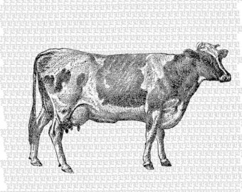 Drawn cattle printable #7