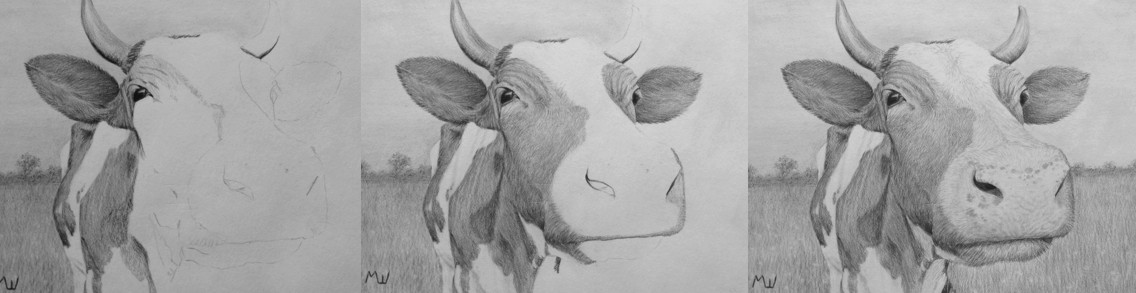 Drawn cattle realistic #11