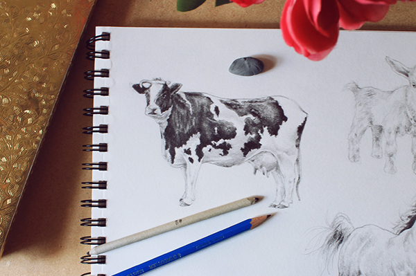 Drawn cattle realistic #10