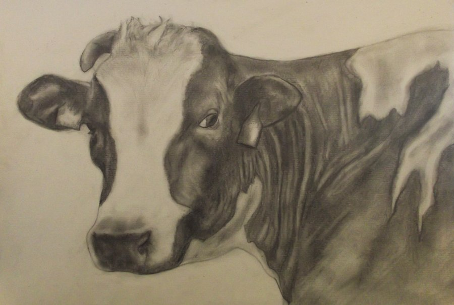 Drawn cattle realistic #8